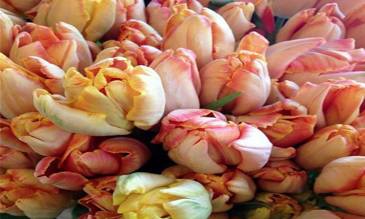 Style-Simplicity-An A-to-Z-Guide-Book-to-Living-a-More-Beautiful-Life-parrot-tulips