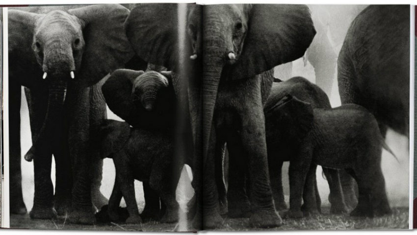 A Portrait of Africa's Wildlife Crisis by Peter Beard